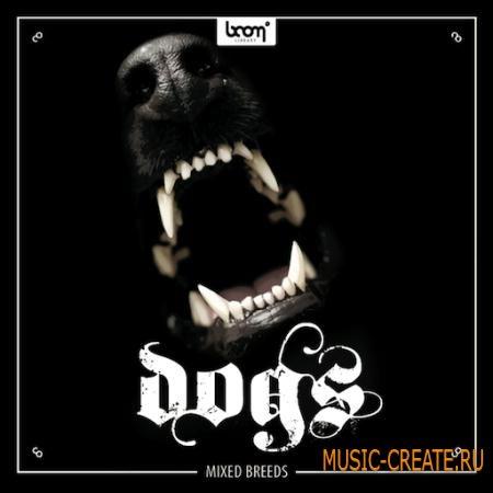 Boom Library - Dogs (WAV / SCD DVD9 Team SONiTUS) - звуковые эффекты собак